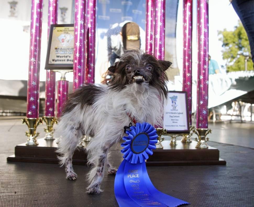 world-ugliest-dog2014