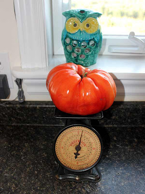 Even the ceramic owl seems surprised that that tomato weighs almost a kilogram!