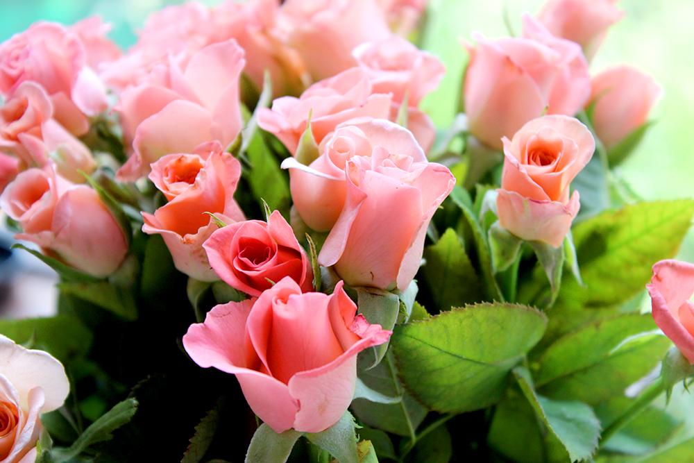 красивое фото, розы