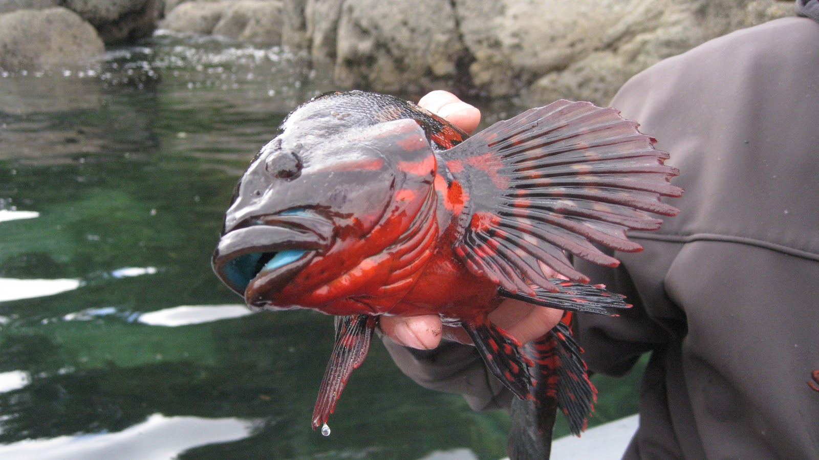 Diving and flats fishing Neah Bay | THE PURSUIT