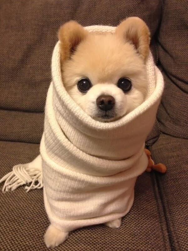 Cute dogs - part 8 (50 pics), cute puppy covers with blanket