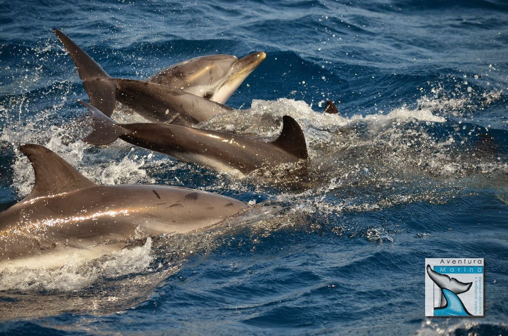 Delfines Ballenas Y Orcas En Tarifa Despidiendo El