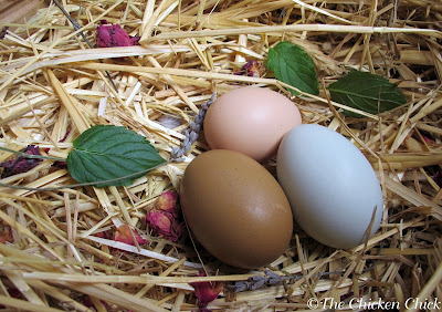 Certain herbs may serve to deter mites and lice from setting up shop on chickens. Read more about nesting box herbs and herbal pest prevention on my blog HERE.