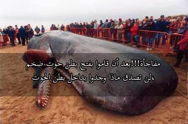 """بالفيديو والصور بعد أن قاموا بفتح بطن هذا الحوت حدثت المفاجأه """"ستذهل مما ستراه"""""""
