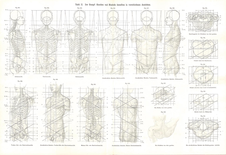 """Research of Artistic Anatomy: Otto Geyer """"Der Mensch Hand- und ..."""