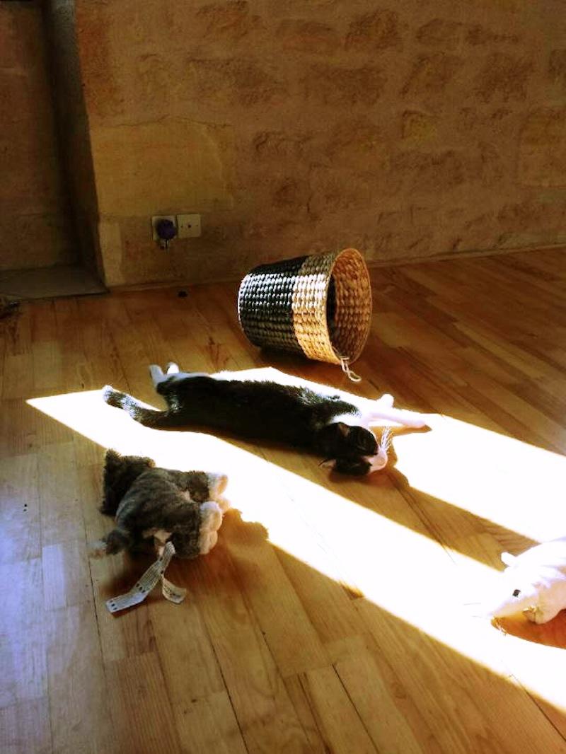 chat dodo au soleil