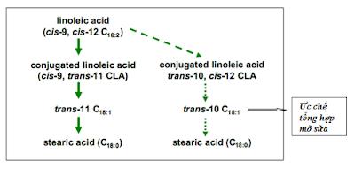 Sơ đồ 3: Con đường hình thành axit béo dạng trans trong dạ cỏ (theo RAGFAR)
