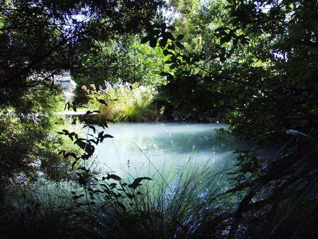 A beautiful water garden funnilogy for Garden water pond