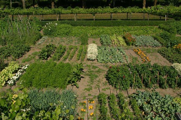 Huerta familiar como organizar la huerta for Como organizar un jardin grande