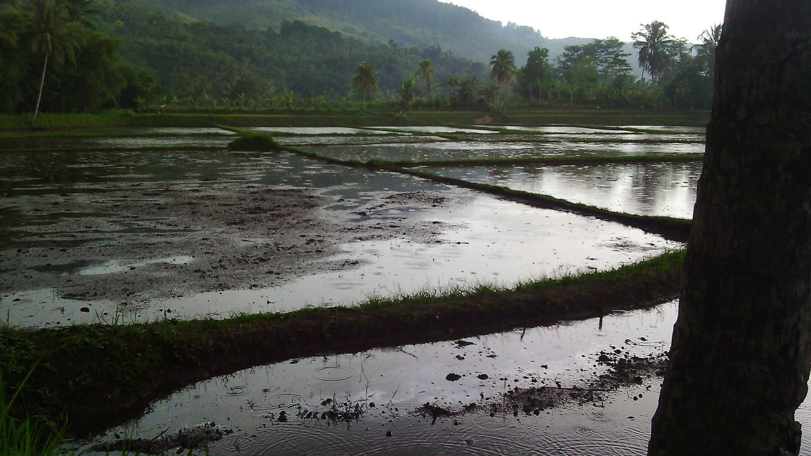 tanah dijual di sukabumi