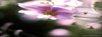 Couverture journal facebook fleur nature