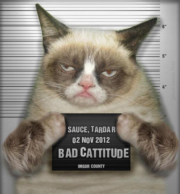 Grumpy Cat No Imgur