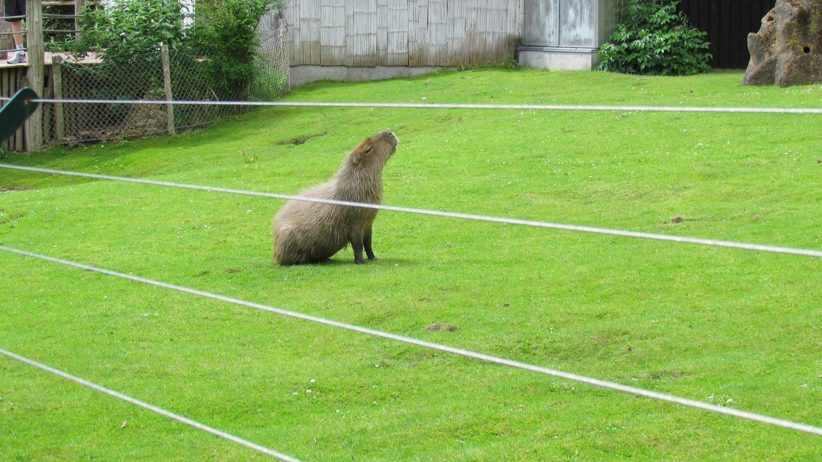 thai lille Istedgade Aalborg Zoo rabat