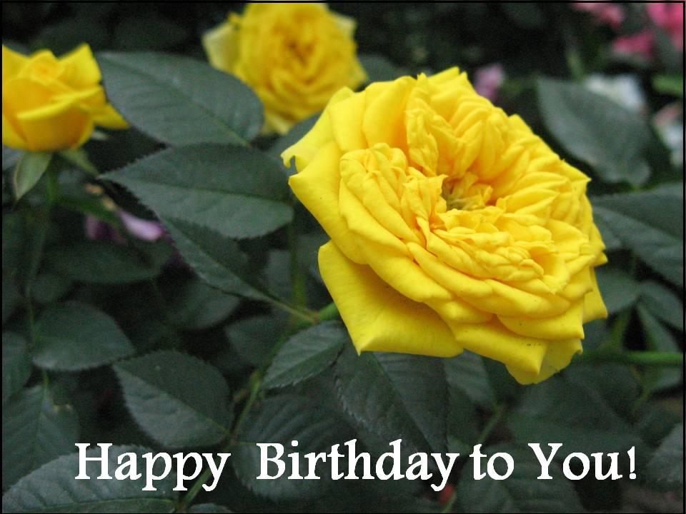 Free Happy Birthday Templates. happy birthday cards homemade.