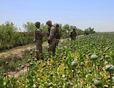 opio afeganistão