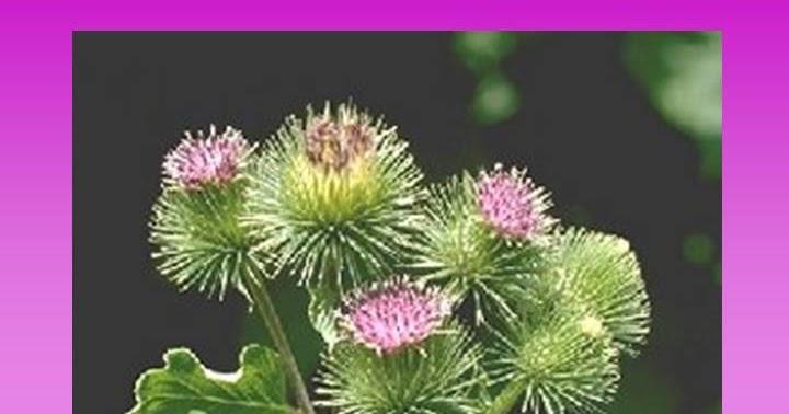 El ungüento serno-de alquitrán las revocaciones a la psoriasis