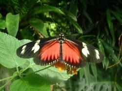 Butterfly Garden - Victoria, B.C.
