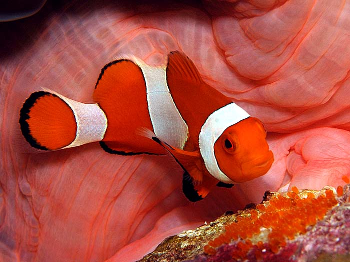 ... same types. It is best to try to keep a single clownfish or a set