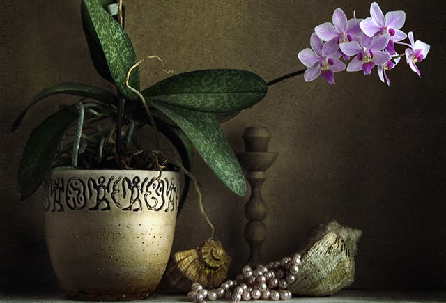 still life photography examples