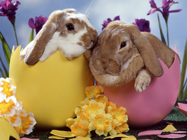 Cute Easter Wallpaper Easter bunny cute happy easter