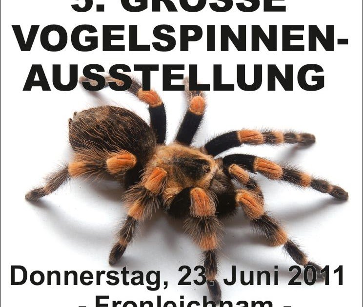 birdspiders alles ber vogelspinnen vogelspinnen ausstellung solingen. Black Bedroom Furniture Sets. Home Design Ideas