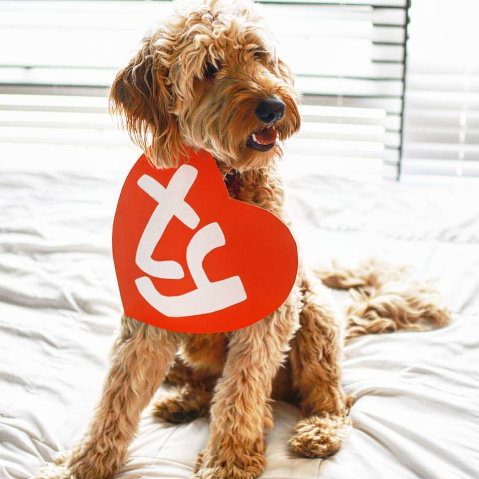 beanie baby costume for dogs