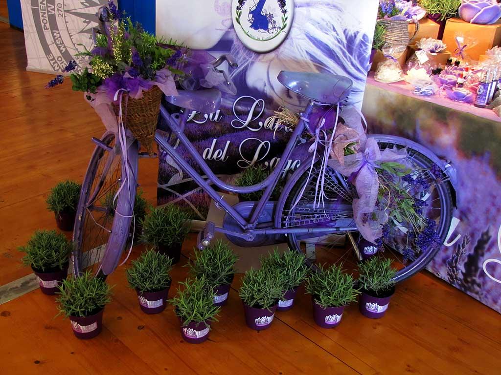 Lavender bicycle, La Lavanda del Lago, Tuttovela Village, Livorno