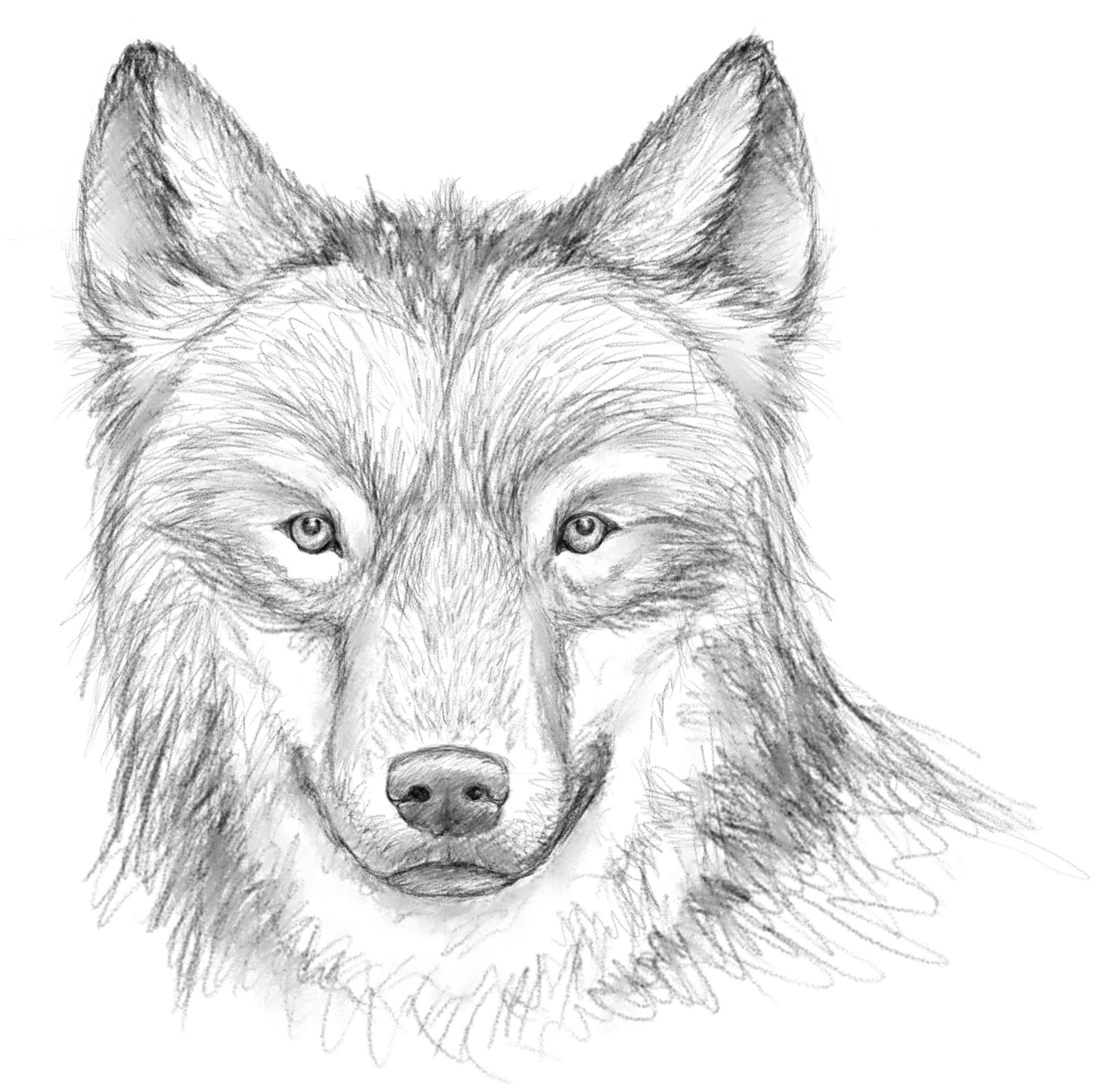 404 not found - Image loup dessin ...