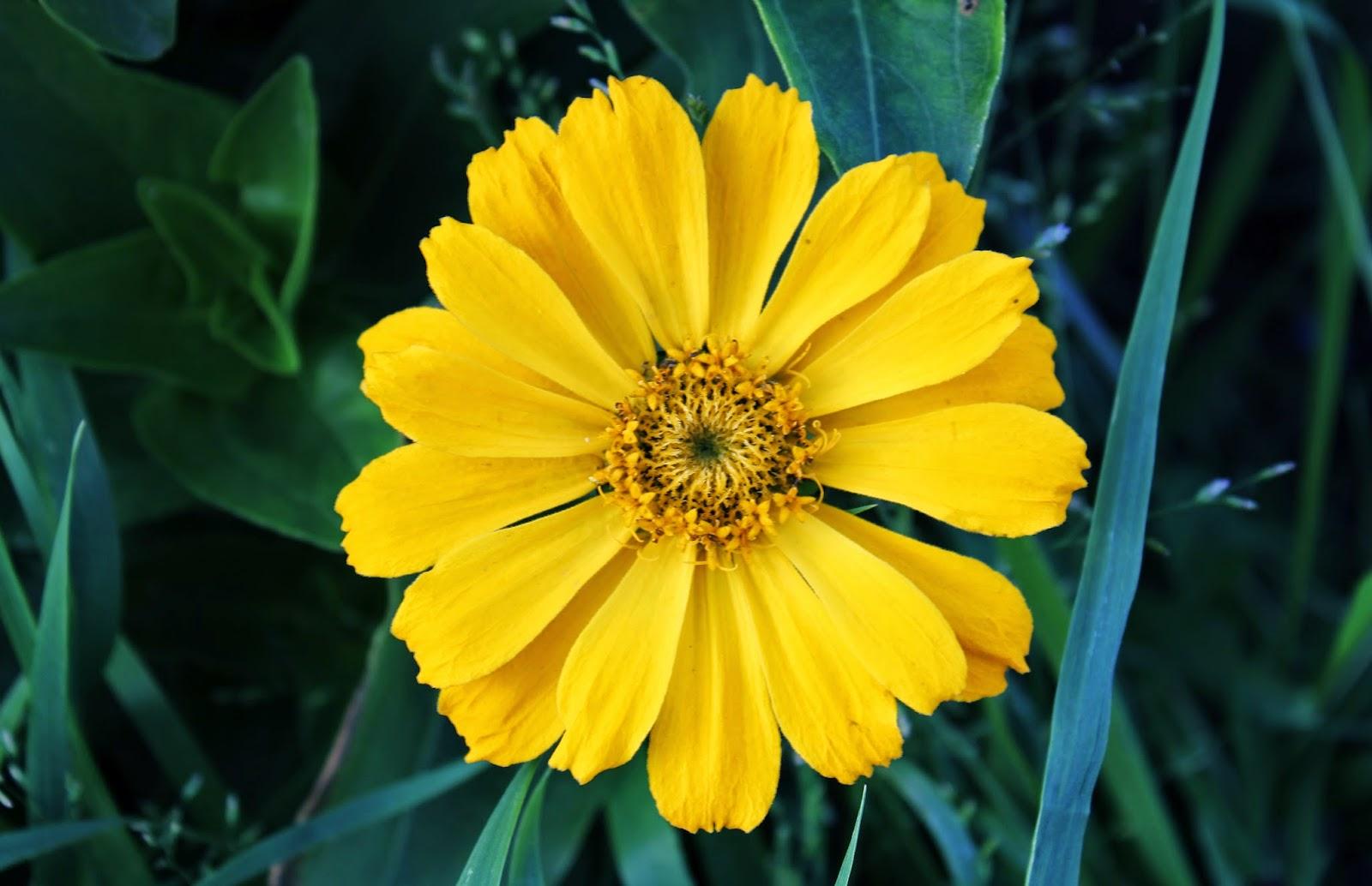 маленький солнечный цветок
