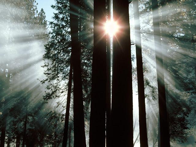 The rays of yosemite valey at yosemite national park wallpaper