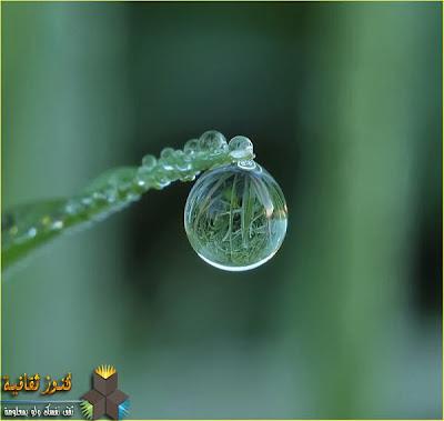 قطيرة ماء كبيرة ترى كأنها زجاج ينعكس فيها الخضروات