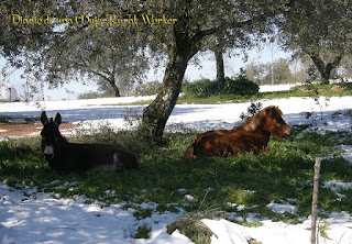 Descanso en la nieve