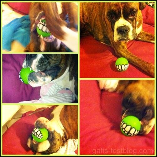 """Boxer Amy mit ihrem Snack-Spielzeug Rogz """"Grinz"""""""