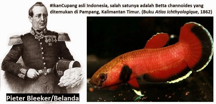 Penemu Ikan Cupang asli Indonesia