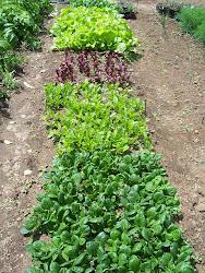 2012 Vegetables