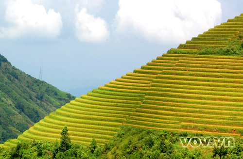 Terraced fields in Sa Pa - Vietnam