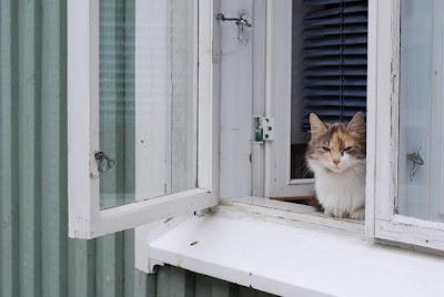 katt i trähusstaden - kissa puutalokapungissa