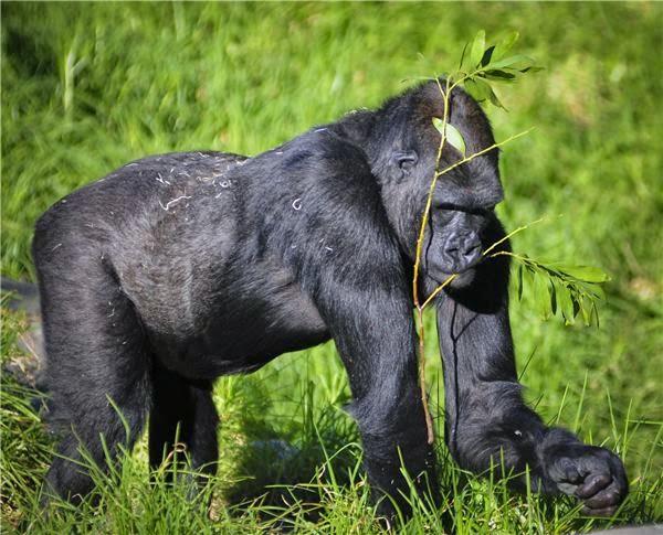 Wild Ones - New Seri trên Animal Planet