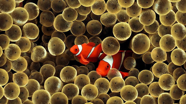 Cool Underwater Wallpapers