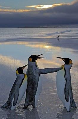 ペンギンの喧嘩