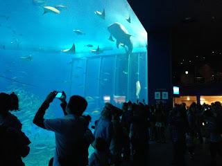美ら海水族館のメインの大水槽