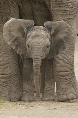 Elephant Hugs
