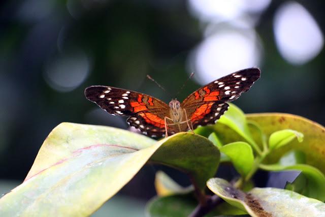 Schmetterling im Botanischen Garten München