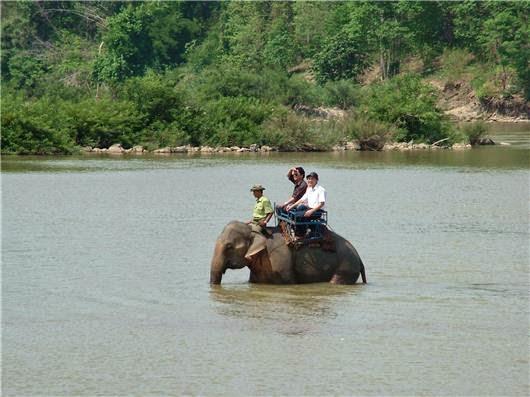 Buôn Mê Thuột địa điểm du lịch thú vị với những chú voi Bản Đôn 3