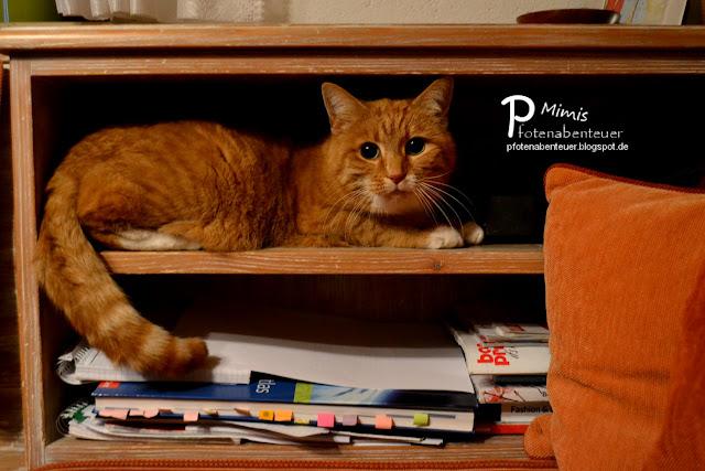 Rote Katze Mimi liegt im Regal