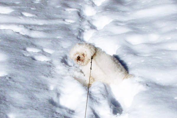 Sophie loves snow