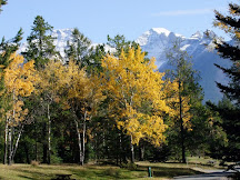 Autumn leaves in Banff