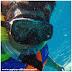 Snorkeling With Turtle, Gili + VLOG