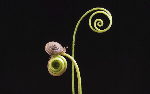 Best Jungle Life snail, snail photos, snail wallpaper