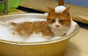 Ba ando al gato - Banar gatos ...